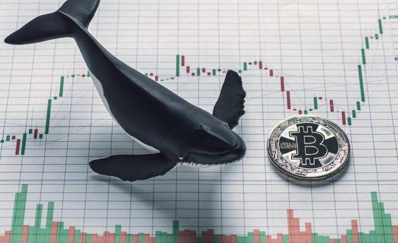 نهنگ های ارز دیجیتال