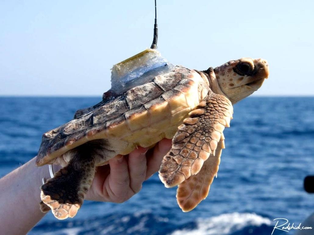 ردیابی حیوانات دریایی